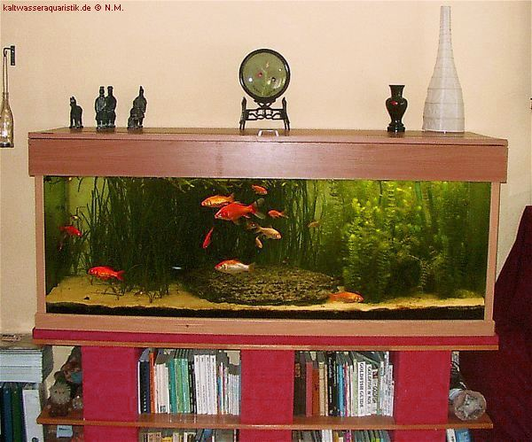 Goldfische mein aquarium for Goldfische im aquarium