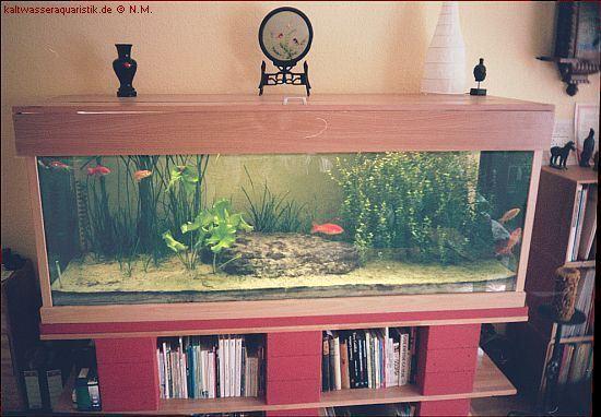 Goldfische mein aquarium for Aquarium goldfische
