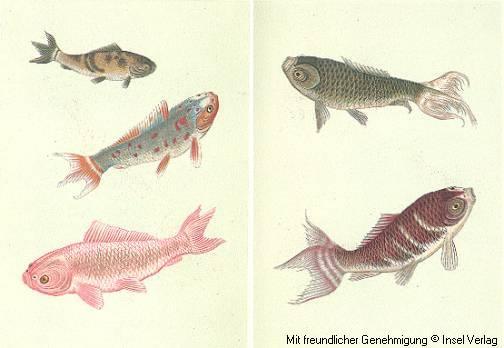 Ungewöhnlich Einfache Färbung Seite Fisch Galerie - Framing ...