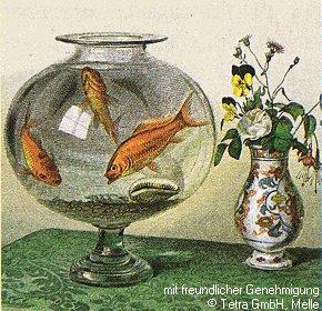 goldfische das goldfischglas. Black Bedroom Furniture Sets. Home Design Ideas